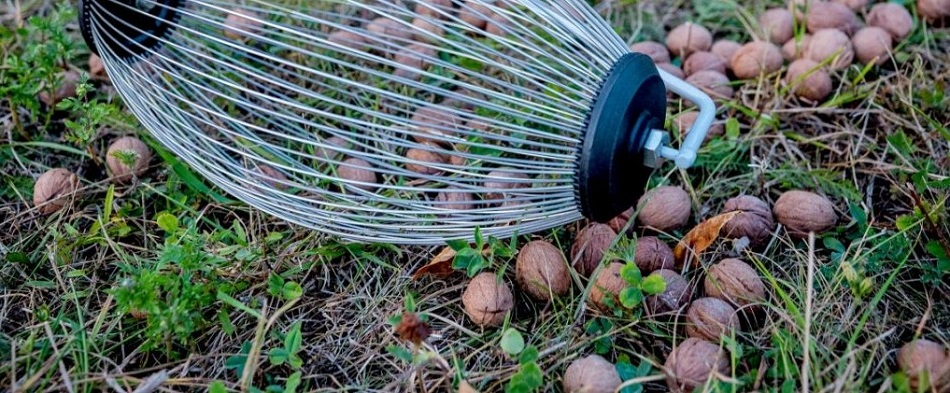 What To Consider Before Buying A Rake For Acorns?