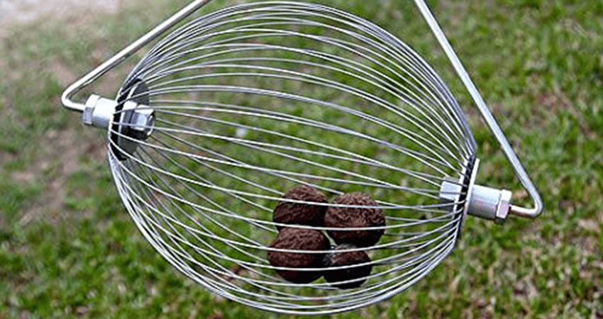 5 Best Rake For Acorns In 2021 – Buying Guide And Review