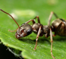 how to get rid of ants in vegetable garden