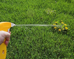 Best-Time-To-Spray-Weed-Killer