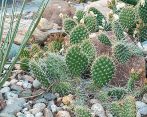 How-To-Start-A-Cactus-Garden
