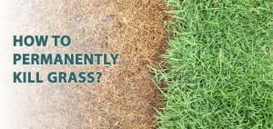 How to permanently kill grass