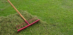 Should-You-Rake-Your-Lawn-in-the-Spring