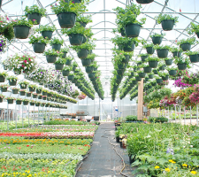 Why Are Greenhouses Green