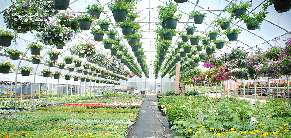 Why Are Greenhouses Green – Answer Might Surprise You 2021