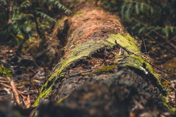 Does Mulch Attract Termites - damp wood
