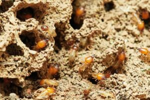 Does Mulch Attract Termites - featured