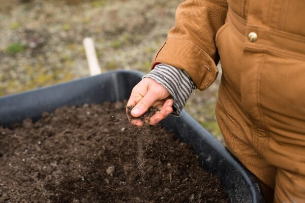 How Long Does It Take For Grass To Grow - woman holding soil