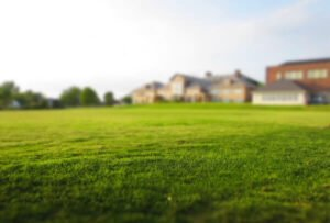 How long does it take for grass to grow - grass on a yard