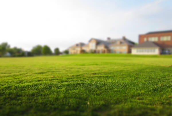 How Long Does It Take For Grass To Grow?
