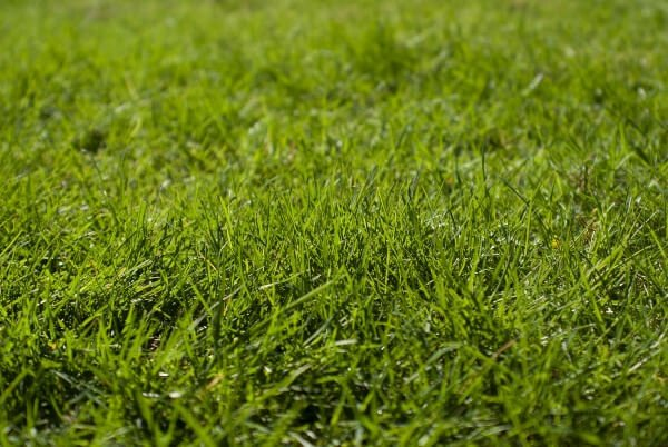 How often to water grass seed - type of grass