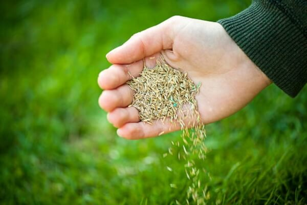 does grass seed go bad - woman holding grass seed