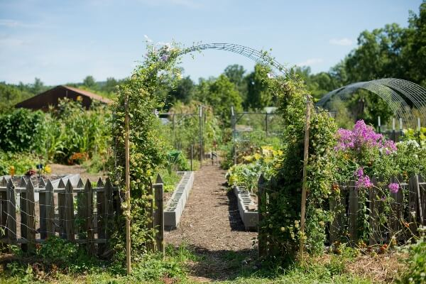 How To Keep Animals Out Of Garden Areas - fenced garden