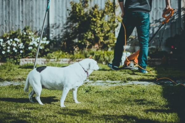 Is Rubber Mulch Safe For Dogs - dog in the garden
